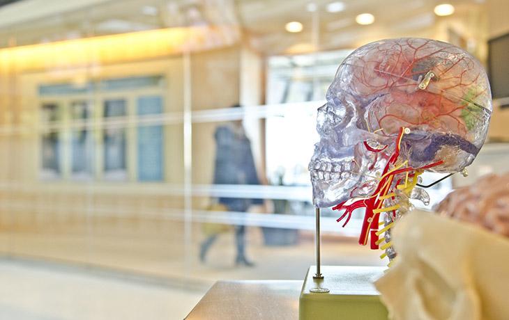Pioneering neuroscience